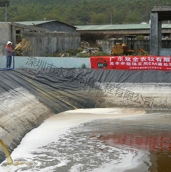 海丰养猪场采用EM菌处理现场