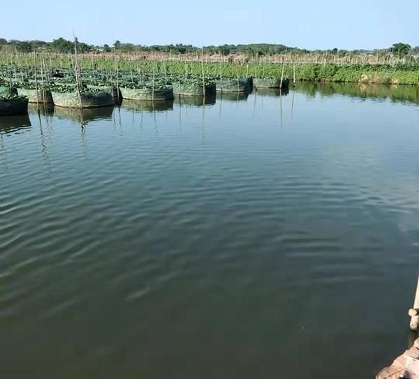 水产养殖除臭
