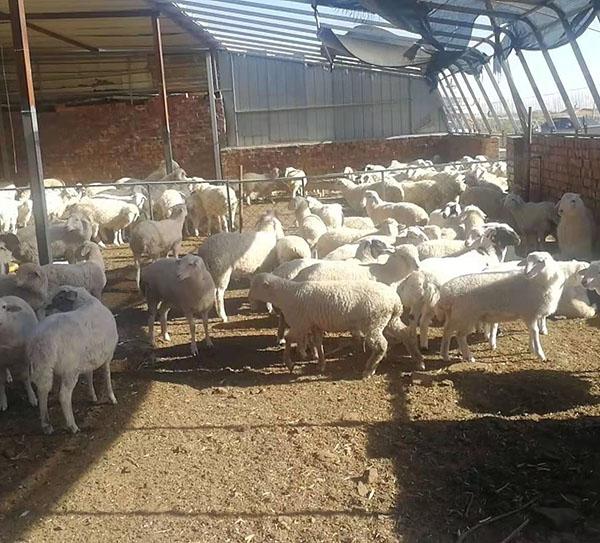 畜禽养殖专用型